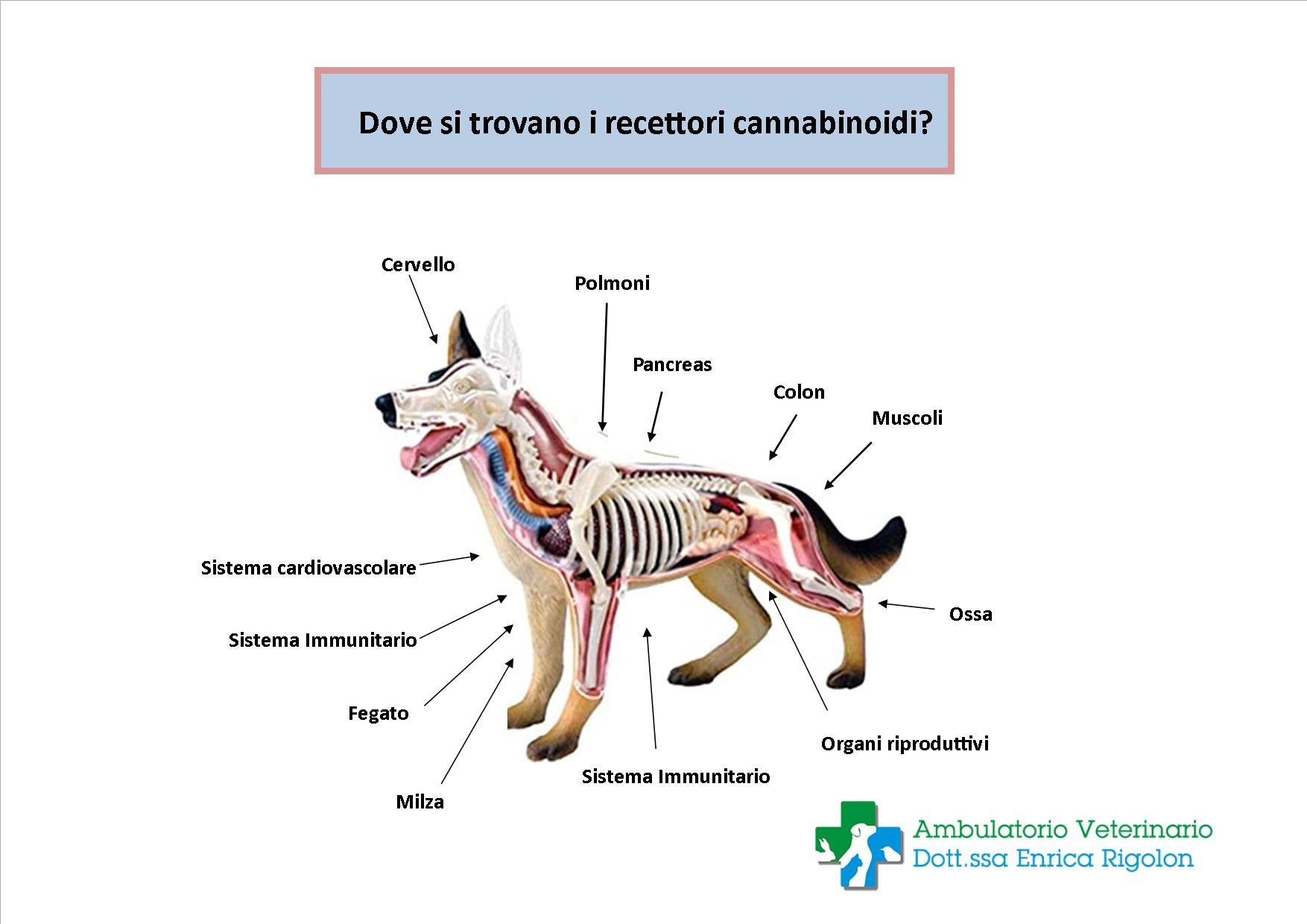 Trattamento con Cannabis terapeutica